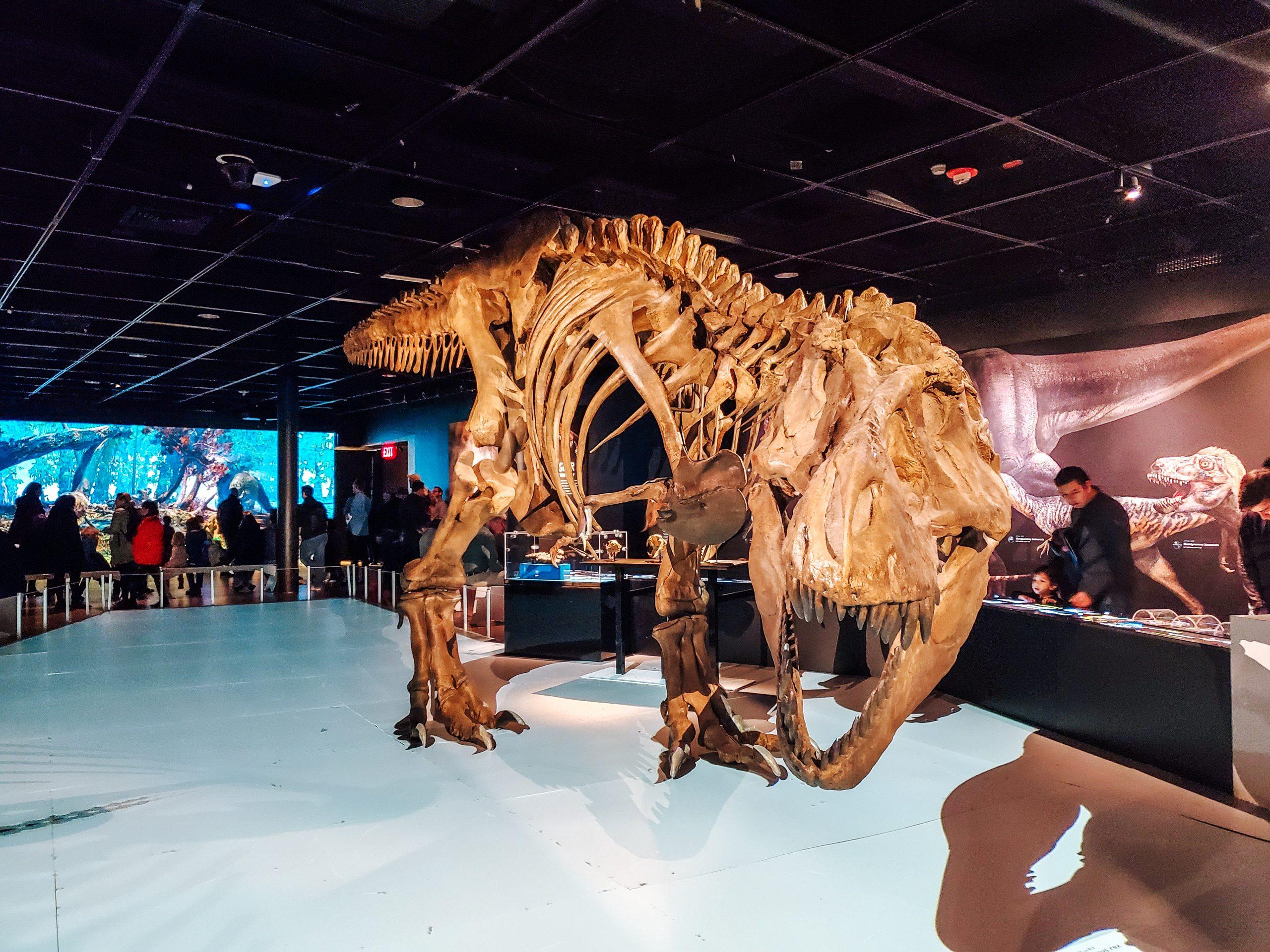 t rex. ultimate predator american museum of natural history